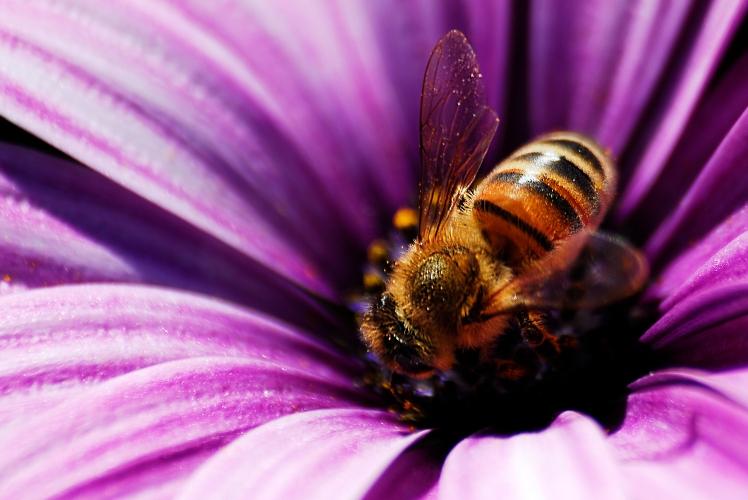 fupeople-bee-robots_main-image