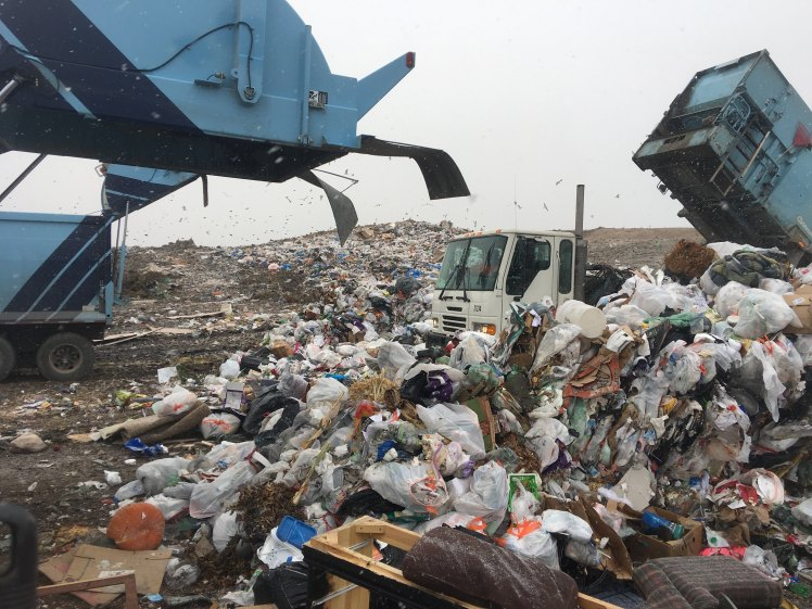 Biodivvy_Landfill_RossMorris