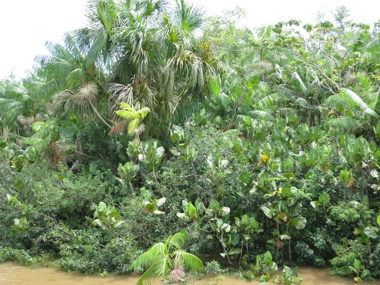 Biodivvy_Rainforest