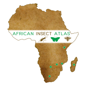 african_insect_atlas