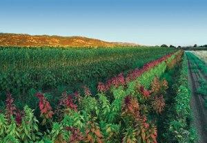 Polyculture Crop